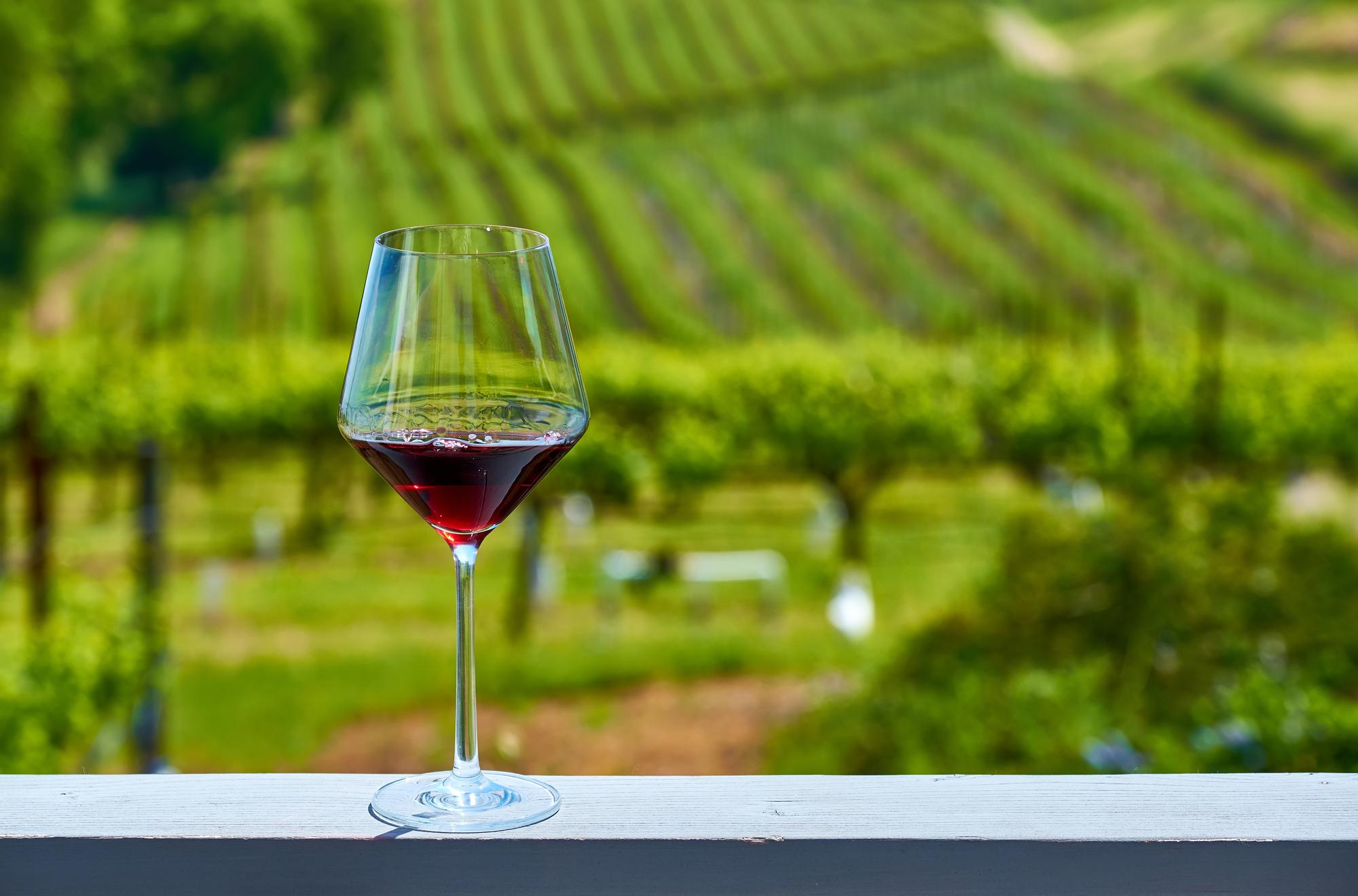 ブドウ園と赤ワイン