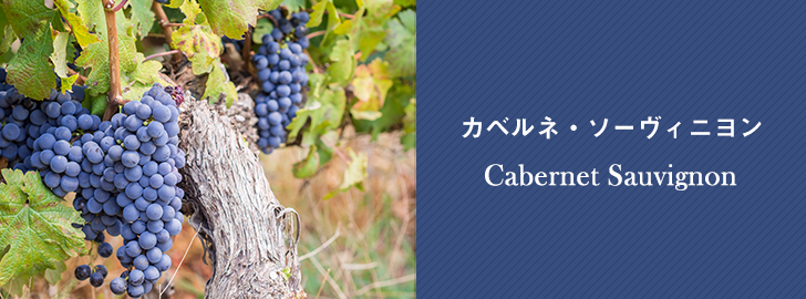 Cabernet Sauvignon カベルネ・ソーヴィニヨン(黒ブドウ)