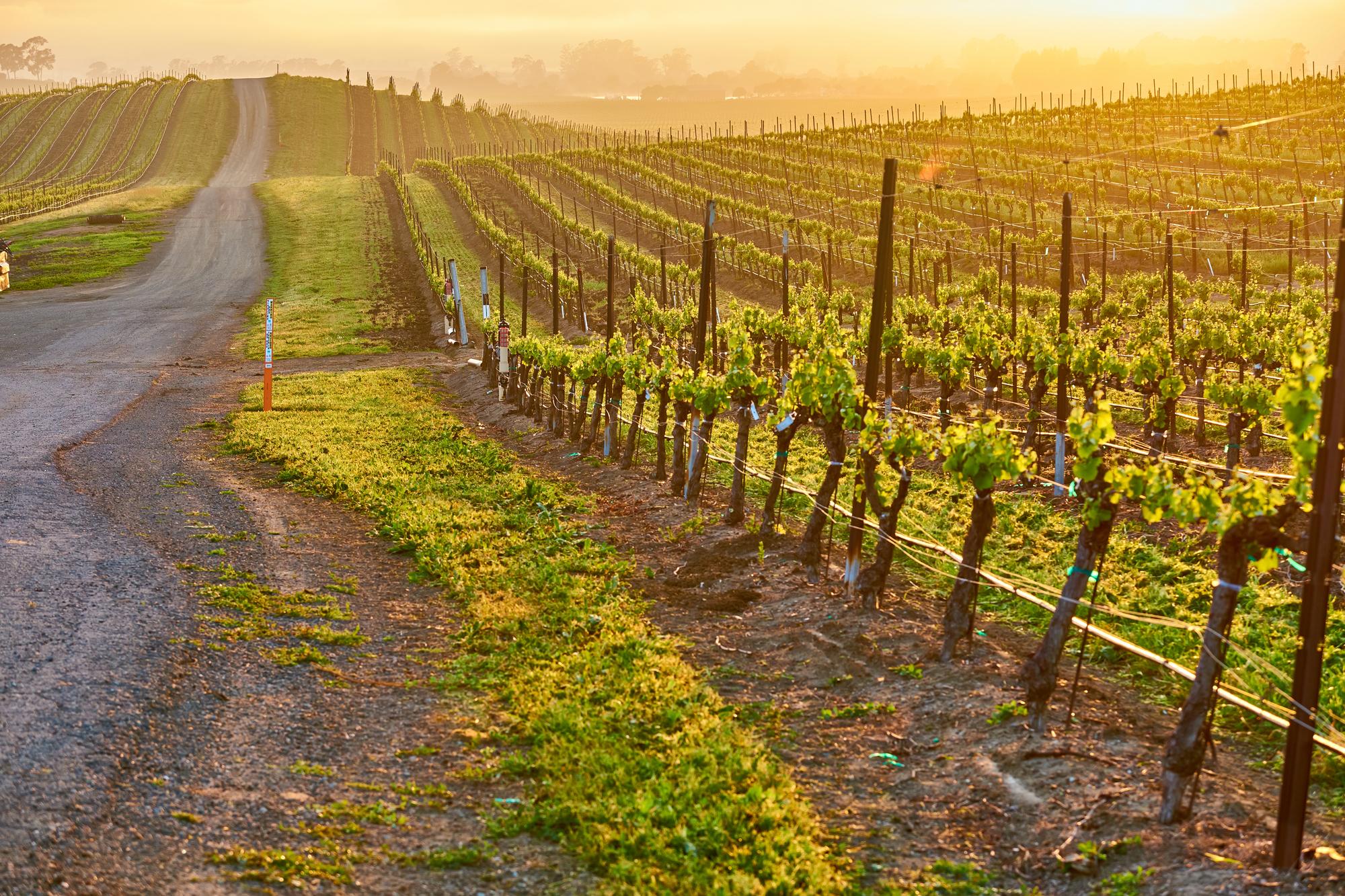 カリフォルニア州のワイン生産地の風景
