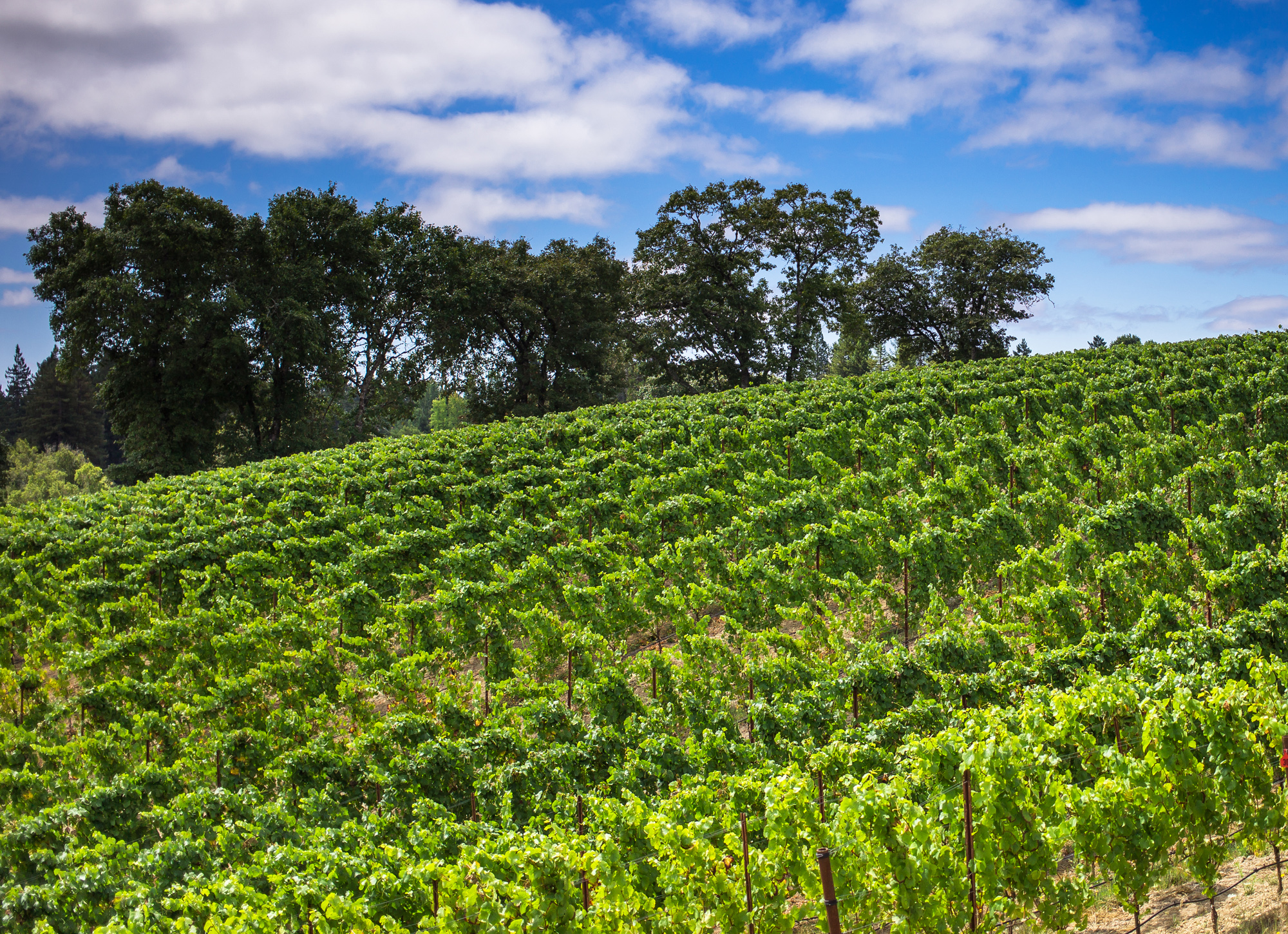 ユーキ・エステートFreeman Winery Yu-ki Estate Sonoma Coast