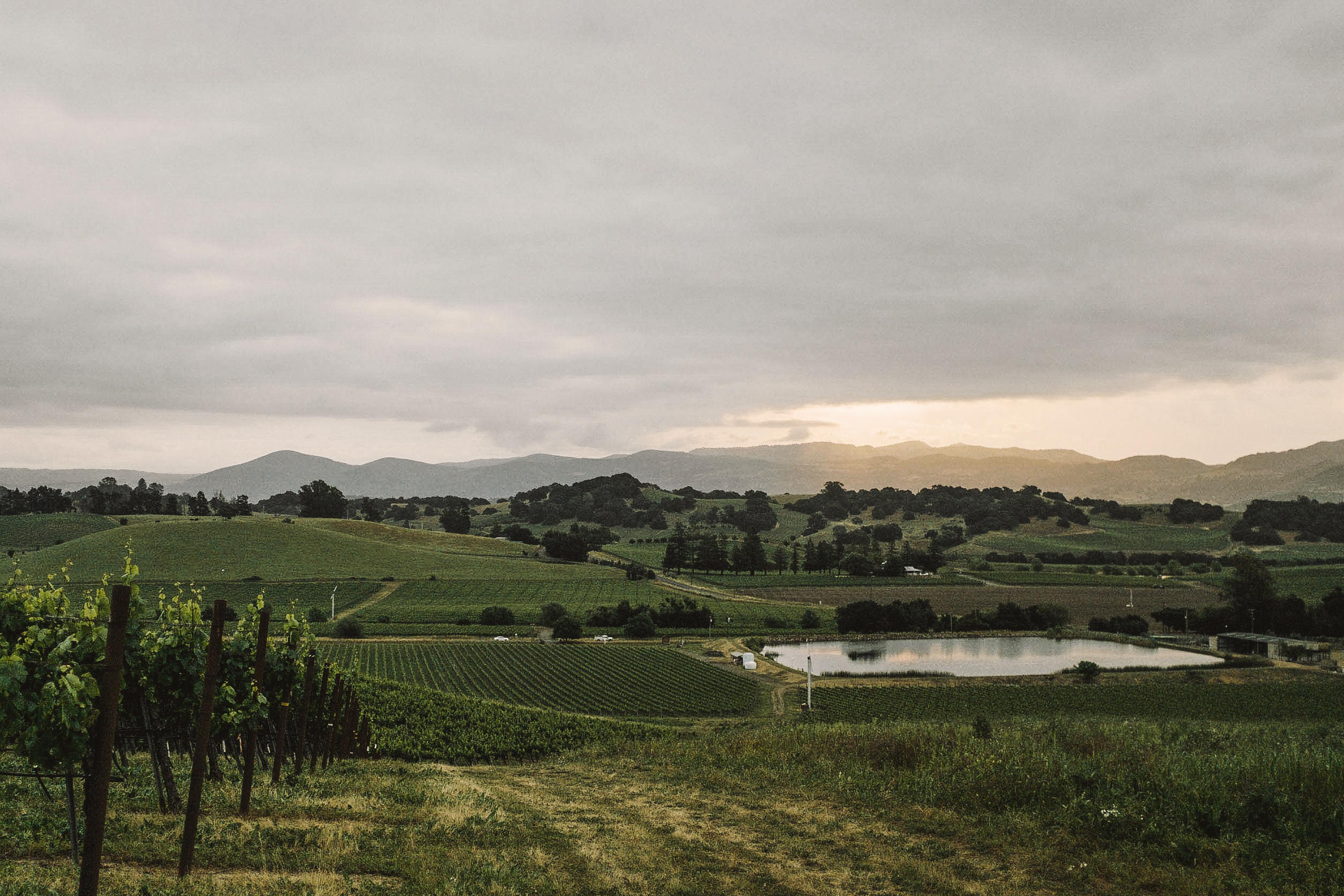 Gran Val Vineyard, Carneros, Napa Valley