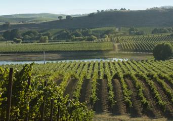 Gran Val Vineyard