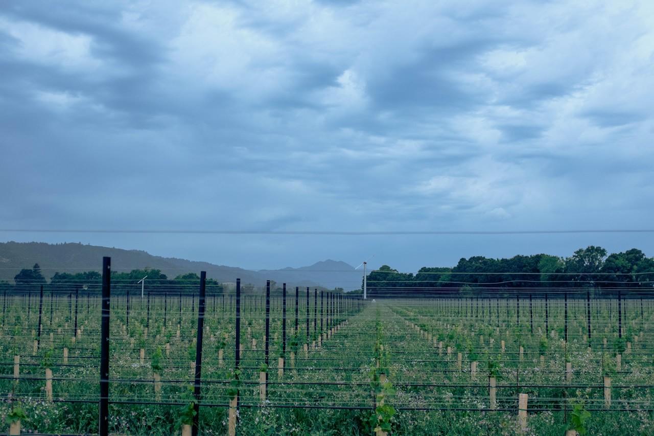 Riverbend Vineyard